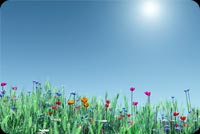 Nature email stationery. Colorful Flowers Looking At The Sun