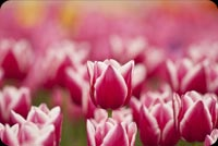 The Vibrant Pinks Of Spring Stationery, Backgrounds