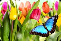 Butterflies Of Spring Stationery, Backgrounds