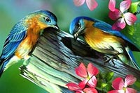 Love Birds & Spring Flowers Stationery, Backgrounds