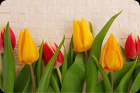 Happy And Colorful Tulips Stationery, Backgrounds