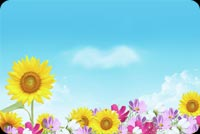 Summer email stationery. Vibrant Color Of Flowers
