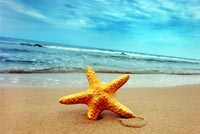 Summer email stationery. Starfish On The Tropical Beach