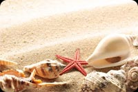 Starfish Seashell On Sand Stationery, Backgrounds