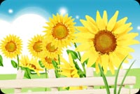 Summer email stationery. Bright Yellow Sunflowers