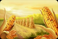 Thanksgiving email stationery. Corn Ready For The Harvest