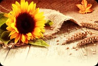 Thanksgiving Wishes To You. Stationery, Backgrounds