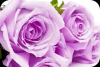 Purple Valentine Stationery, Backgrounds