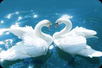 Love Swans Stationery, Backgrounds