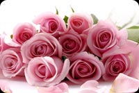 A Dozen Of Pink Roses Stationery, Backgrounds